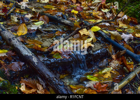 Small waterfall, downstream from Iargo Springs, in the Huron National Forest. This was taken in October of 2018 on a beautiful autumn day in Michigan. - Stock Photo