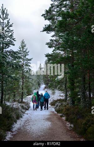Forest walk in winter snow, Rothiemurchus Estate, near Aviemore, Highland Region, Scotland - Stock Photo