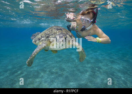 July 30, 2018 - Red Sea, Abu Dabab, Marsa Alam, Egypt, Africa - Woman with mask and fins swim with Sea Turltle under surface of the blue water. Green Sea Turtle  (Credit Image: © Andrey Nekrasov/ZUMA Wire) - Stock Photo