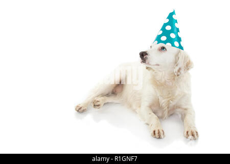 CUTE DOG WITH COLORED EYES CELEBRATING A BIRTHDAY OR NEW YEAR PARTY, WEARING A BLUE POLKA DOT HAT. LOOKING UP. ISOLATED SHOT AGAINST WHITE BACKGROUND. - Stock Photo