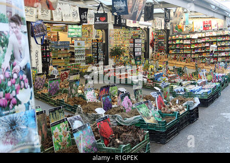 One of the stalls in the floating flower market Amsterdam. The Bloemenmarkt is the world's only floating flower market. Founded in 1862, it is sited in Amsterdam, Netherlands, on Singel between Muntplein and Koningsplein in the city's southern canal belt. - Stock Photo