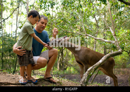 Father and young son feeding a deer in the wild. - Stock Photo