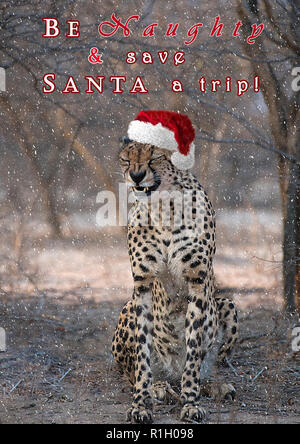 'Be Naughty and Save Santa a Trip' - Cheetah in the snow - Stock Photo