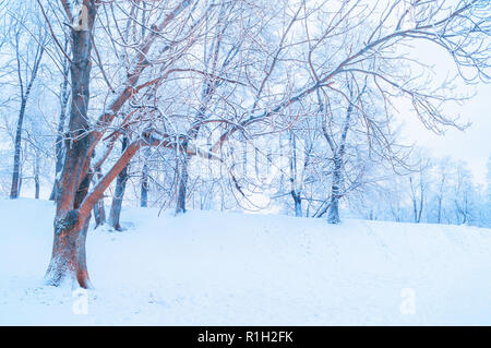 Winter landscape - frosty trees in winter forest in the sunny morning. Winter landscape with snowy trees. Tranquil winter nature in early morning - Stock Photo