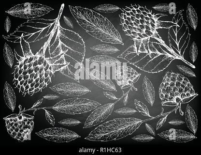 Berry Fruits, Illustration Wallpaper of Hand Drawn Sketch  Fresh Korean Black Raspberries or Rubus Coreanus and Golden Raspberries or Rubus Ellipticus - Stock Photo