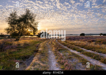 Beautiful sunset over heathland and Poole Harbour - Stock Photo