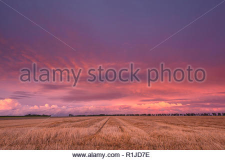 Clouds above a harvested cornfield illuminated by the sunset, Neuss, North Rhine-Westphalia, Germany - Stock Photo