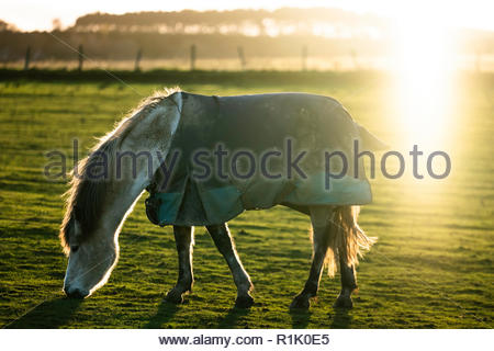 Selkirk, Scottish Borders, UK. 13th November 2018. The sun sets behind a pony in a New Zealand winter rug at Midlem village in the Borders. Credit: Chris Strickland / Alamy Live News - Stock Photo