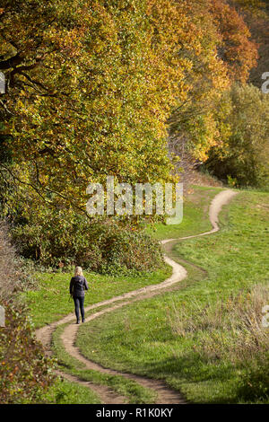 UK Weather: A beautiful autumn day in Hampstead Heath, North London, 13th November 2018. Where the trees are in full colour and people are enjoying the good autumn weather. Credit: David Bleeker Photography.com/Alamy Live News - Stock Photo