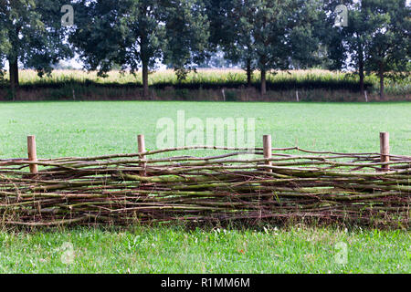 Wattle fence with a corn field in the background in Voorst in the Netherlands - Stock Photo