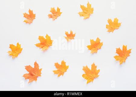 set of orange autumnal maple leaves isolated on white - Stock Photo