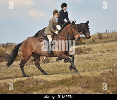 lady fox hunters - Stock Photo