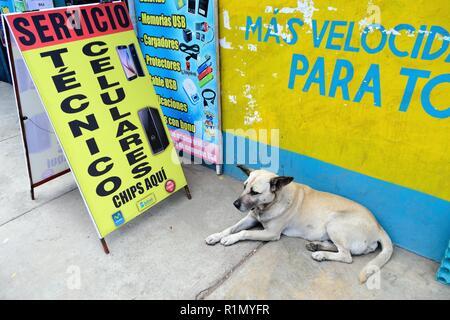 Street dog - Market in HUARAZ. Department of Ancash.PERU                     - Stock Photo