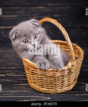 A kitten put a paws on the edge of the basket - Stock Photo