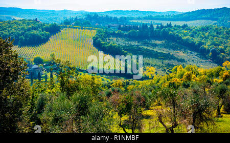 View over the hills covered in olive trees and vineyards around San Donato, Tavarnelle Val di Pesa, Tuscany, Italy - Stock Photo