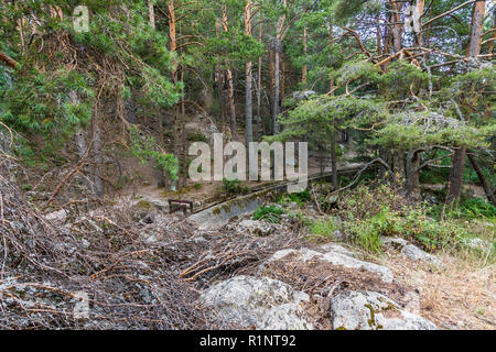 Pine forest and water channel with gate in a place called La Barranca in the Sierra de Guadarrama. Madrid Spain - Stock Photo