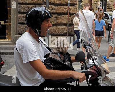 yawning man on scooter with white t shirt & black helmet carrying grey poodle dog in shoulder bag at pedestrian crossing in Florence, Tuscany,Italy - Stock Photo