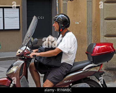 man on scooter with white t shirt & black helmet carrying grey poodle dog in shoulder bag on his lap at pedestrian crossing in Florence, Tuscany,Italy - Stock Photo