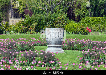 Stone ornamental vase among flowering pink tulips, in a colorful garden in rural England countryside, on a summer sunny day . - Stock Photo