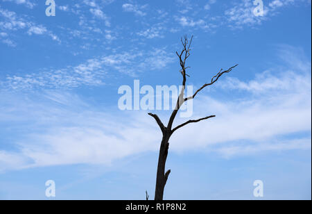 A dry gum tree trunk against a brilliant blue colored sky and white fluffy clouds. - Stock Photo