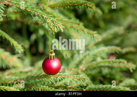 Red Christmas and New Year Decoration isolated on green nature background. Minimalism, greeting card,art design with holiday bauble. Beautiful Christmas tree closeup decorated with ball, holly berry. Space for your text. - Stock Photo