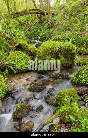 Close-up of water & rocks in small stream (Grewelthorpe Beck) running through scenic, ancient woodland - Hackfall Woods, North Yorkshire, England, UK. - Stock Photo