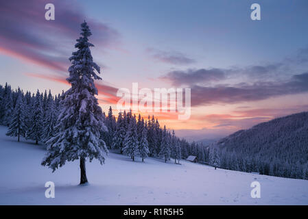 Christmas view. Winter landscape with fir trees in the snow. The wooden house in a mountain forest. Beautiful fabulous evening. Carpathians, Ukraine,  - Stock Photo