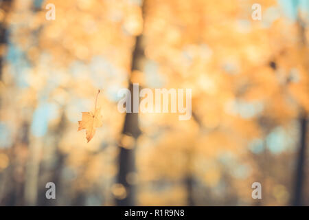 Autumn landscape. Autumn tree leaves sky background. Beautiful fall leaves and blurry bokeh background - Stock Photo