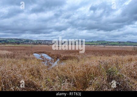 Looking like a giant footprint on castle Semple Marshes on the Loch at Lochwinnoch in Scotland. - Stock Photo