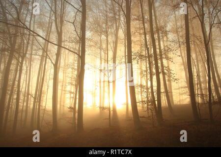 Foggy scene in forest, sunlight breaking on trees - Stock Photo