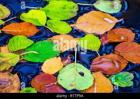 Coloured autumn leaves floating on water - Stock Photo