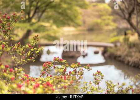japanese Togetsu Stone bridge with red flowers bokeh on the pond of Rikugien Park in Bunkyo district, north of Tokyo. The park was created at the begi - Stock Photo