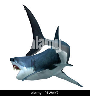 Great White Shark Tail - The Great White Shark can live for 70 years and is one of the largest predators of the oceans. - Stock Photo