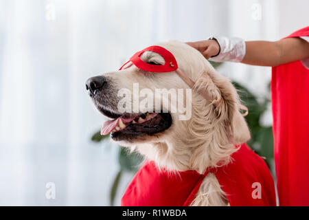 Partial view of hand petting golden retriever dog in red superhero mask - Stock Photo