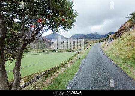 Road with rowan tree on circular walk through Lake Ogwen valley, Snowdonia national park, national trust, North Wales, UK - Stock Photo