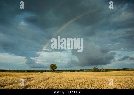 Colorful large rainbow against a cloudy sky, tree growing in the grain - Stock Photo