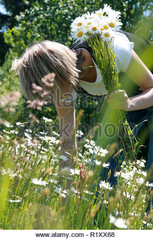 girl picks daisies in a meadow - Stock Photo