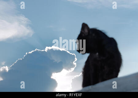 Black cat on a background of the evening sky with the sun behind the clouds - Stock Photo