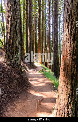 Hiking trail going through redwood forest of Muir Woods National Monument, north San Francisco bay area, California - Stock Photo