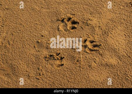 Prints  in the sand  on a beach - Stock Photo
