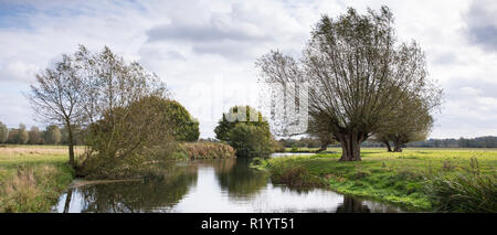 River Stour and English willow trees in Suffolk Coasts and Heaths Area of Outstanding Natural Beauty, near East Bergholt, UK - Stock Photo