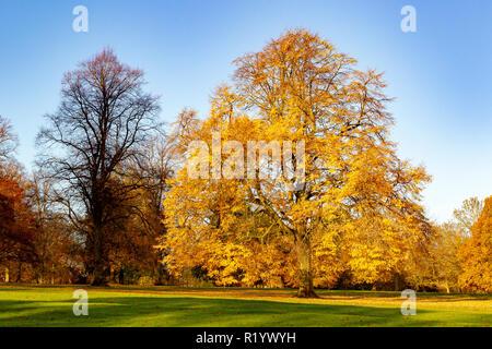 Abington Park, Autumn Colours, Northampton, UK - Stock Photo
