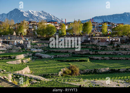 The small village Nako in Kinnaur, surounded by green fields and snow covered mountains - Stock Photo