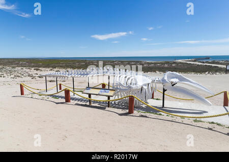 Gray Whale (Eschrichtius robustus) Skeleton on a beach. Mexico, Baja California Sur, Guerrero Negro, Ojo de Liebre Lagoon (formerly known as Scammon's Lagoon) - Stock Photo