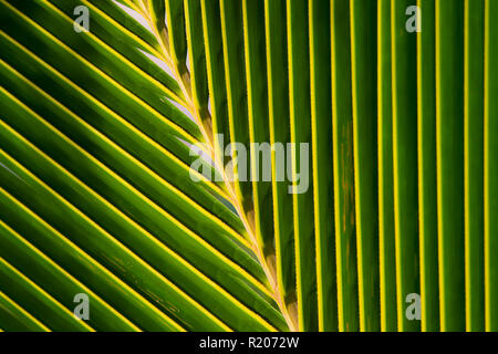 Close-up view of a palm leaf that creates a natural pattern. - Stock Photo