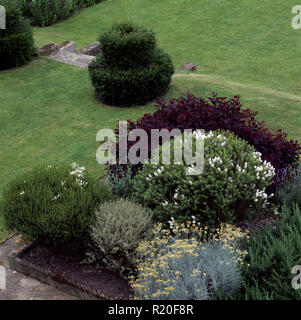 Birds-eye view of shrub bed with curry plant and hebe - Stock Photo