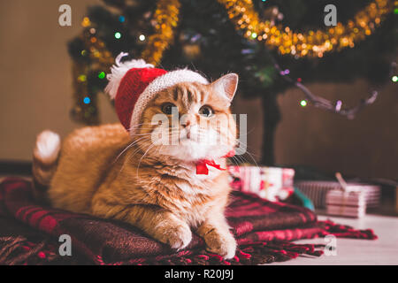 Red cat wears Santa's hat lying under Christmas tree. Christmas and New year concept - Stock Photo