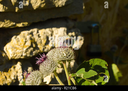 Bee climbing on a green plant up close - Stock Photo