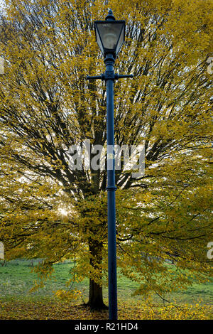 An autumn tree and Edwardian lamp post in Ruskin Park, on 12th November 2018, in Southwark, London, England. - Stock Photo