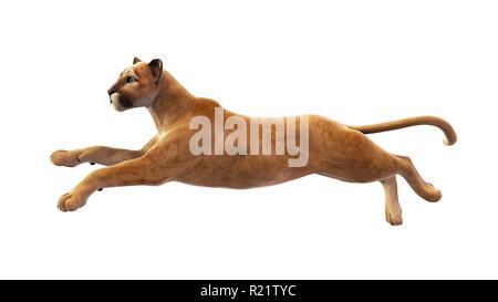 Puma, mountain lion leaping, wild animal isolated on white background - Stock Photo
